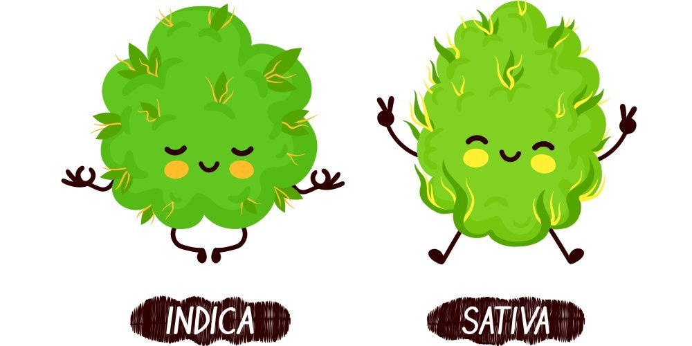 The effects of indica vs sativa