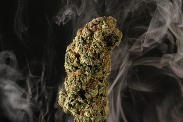 Closeup of cannabis bud