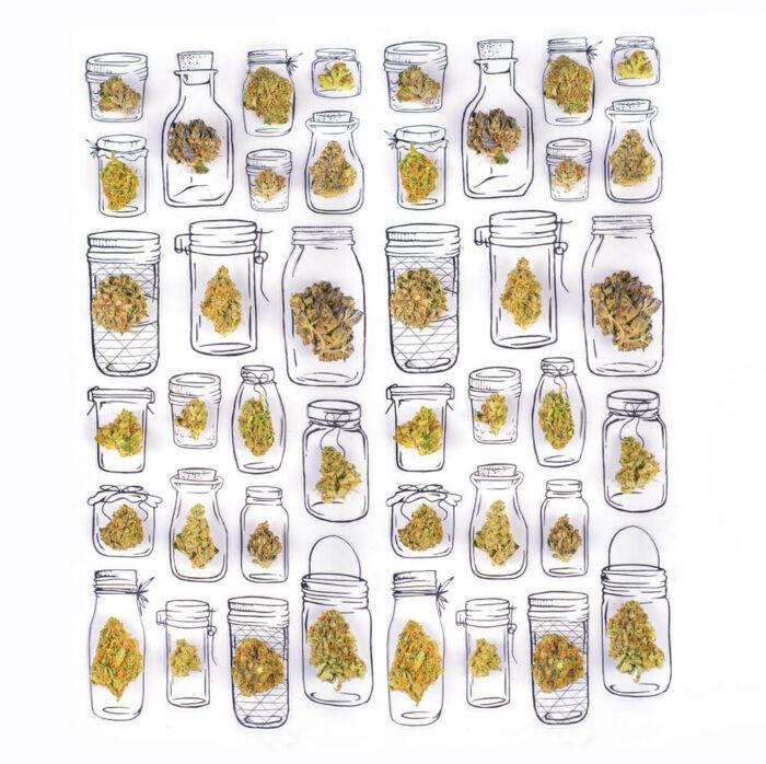 Different cannabis strains