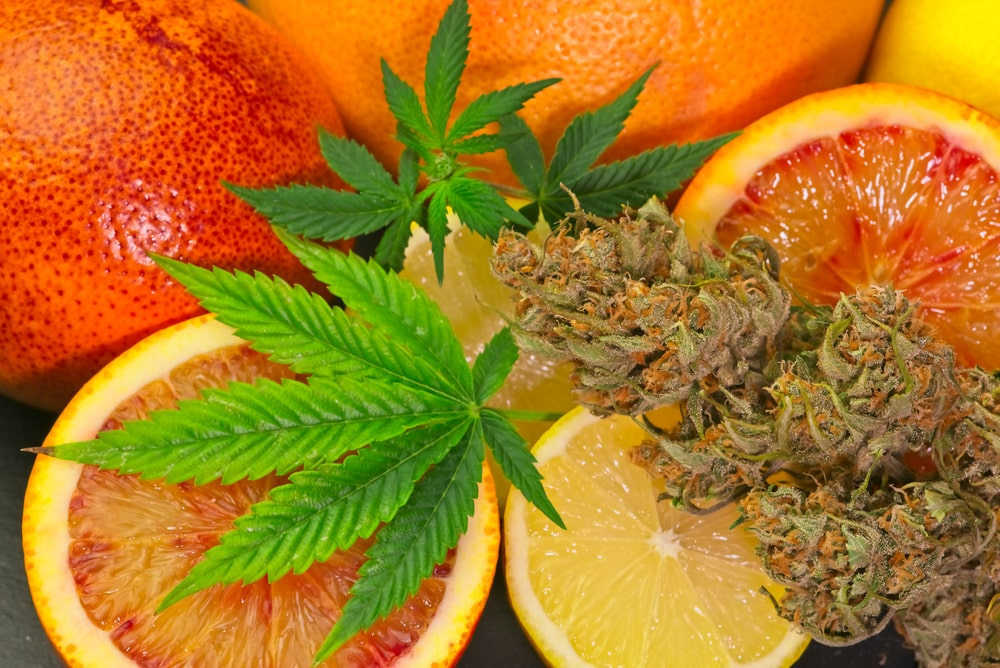 Fruity Weed Strains